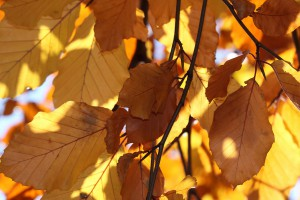 9051-red-orange-and-yellow-autumn-leaves-on-a-tree-pv